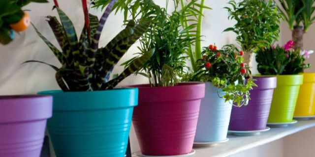 landscape-1435851982-houseplant-says-about-you-index